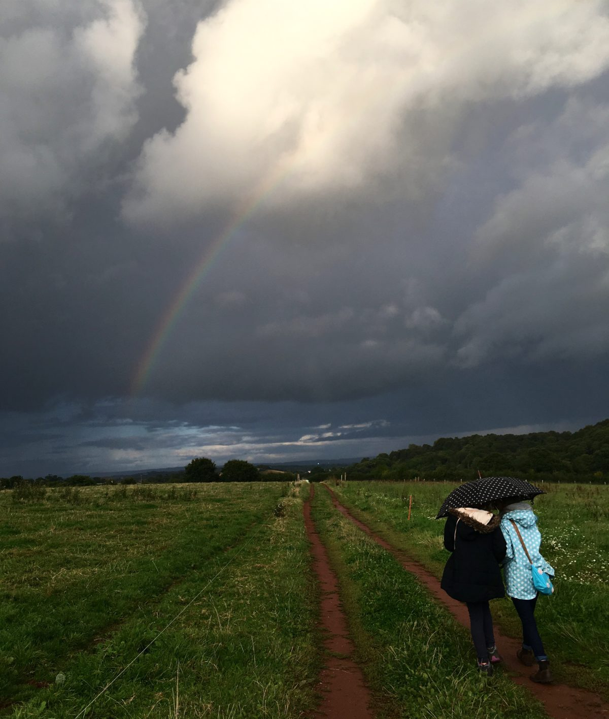 Bats and rainbows: goodbye to summer at Exeter Growers